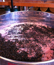 Artesy wine making